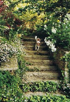 Beautiful garden steps bordered by Erigeron (Santa Barbara Daisy) in the garden of landscape architect Paolo Pejrone in Piedmont, Northern Italy.