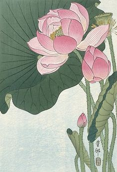 'Lotus Flower - Japanese Block Print' Art Print by fineearth Flowering lotus flowers, Ohara Koson, 1920 1930 / Japanese Woodcut Millions of unique designs by independent artists. Find your thing. Art Lotus, Lotus Kunst, Japanese Lotus, Japanese Flowers, Japanese Peony Tattoo, Japanese Water, Art Floral, Impressions Botaniques, Lotus Painting
