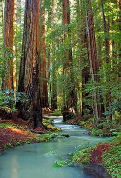 Redwood Stream, Mendocino County, California- See the redwood forest Places To Travel, Places To See, Foto Nature, Magic Places, Mendocino County, Redwood Forest, Belle Photo, Beautiful Landscapes, The Great Outdoors