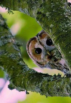 cute little peeper