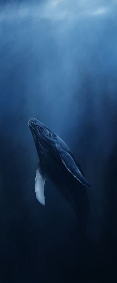 Humpback Whale - My dad and I swam with a mother and her child outside of Kaanapali Beach, Maui