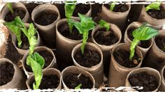 many organic ways to use what you have to deter pests and odors without chemicals