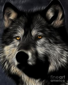 Twilight Eyes Of The Lone Wolf ~ Artist: Wings domain Art and Photography