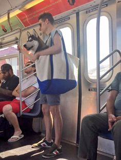 Husky in a Bag   Dogs Are Not Allowed On NYC Subway Unless They're In A…
