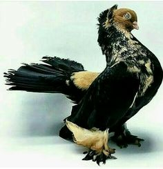 Cute Pigeon, Pigeon Bird, Pigeon Pictures, Bird Pictures, Zoo Animals, Animals And Pets, Cute Animals, Pretty Birds, Beautiful Birds