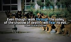 images of biblical quotes | Bible Quotes Psalm 23:4 - Even though I walk through the sh. | Krexy ...