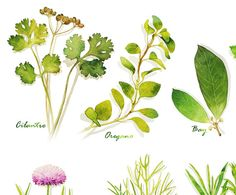 Herb watercolor poster 11X14 Poster 12X18 Poster Kitchen