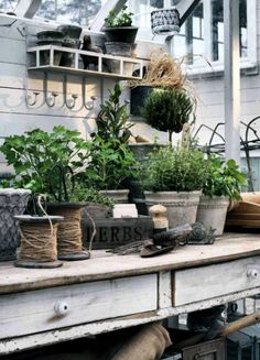 Potting bench in greenhouse