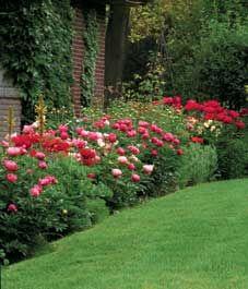 Perennial hedges