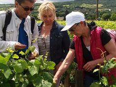 Journée Découverte de la vigne en Bourgogne - Explications de la vigneronne pour le travail d'acolage #GourmetOdyssey