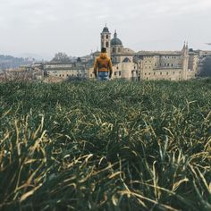 New perspective w/ @alessiotommasini | #urbino #igerspu #lastlight #chasinglight  #perspective #grass #color #panorama #landscape #ig_italy #italian_places by gusions