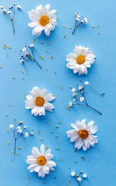 Leaves Wallpaper Iphone, Wallpaper Nature Flowers, Flowery Wallpaper, Flower Background Wallpaper, Sunflower Wallpaper, Beautiful Flowers Wallpapers, Beautiful Nature Wallpaper, Cute Patterns Wallpaper, Scenery Wallpaper