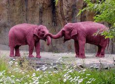 Englishlinks: Seeing pink elephants