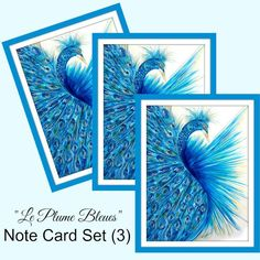 Peacock Greeting Card Set Peacock Cards Blank Greeting Cards