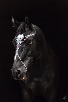 Portrait vor schwarzen Hintergrund - Kopfschmuck für Pferde Horses, Portrait, Animals, Beautiful, Black, Black Backgrounds, Fascinators, Calendar, Animales