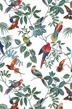 Photowall has wallpaper for every room at affordable prices. Tropical Wallpaper, Bird Wallpaper, Original Wallpaper, Pattern Wallpaper, Wallpaper Designs, Motif Tropical, Tropical Birds, Plant Illustration, Botanical Illustration