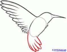 How to Draw a Hummingbird and Flower, Step by Step, Birds, Animals, FREE Online Drawing Tutorial, Added by Dawn, February 6, 2013, 8:28:17 pm