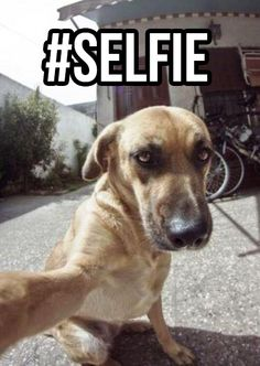 wakaka!!! OMG wat has the earth becom even dogs are doin selca(meanin selfie in korean btw for those that didnt know) pics!