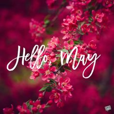 """Our floral collection of May cards is made to be shared to spread the joy that this month brings. We say a colorful big """"Hello, May! Seasons Months, Days And Months, Seasons Of The Year, Months In A Year, May Month Quotes, Hello May Quotes, Calendar Wallpaper, Iphone Wallpaper, New Month Wishes"""