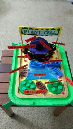 Plant cell Plant Cell Project, Science Projects, Lunch Box, Diy Crafts, Plants, Science, Make Your Own, Bento Box, Homemade