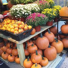 Finally picking up a  #happyhalloween #fall #pumpkin #flowers #floral #florals #decor #prettylittlethings #nationalpumpkinday #mtlmoments #vegan #vegansofig #instamoment #autumn #instamood #nature #picoftheday #potd #mtl #qc #mtlblogger #blogueuse #igersmontreal #igers #canadianblogger #quebecblogger