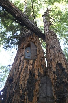 Redwood Tree House / The Green Life <3