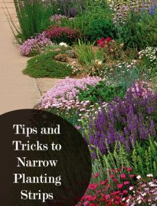 Narrow planting strips don't have to be a dilemma.  They soften those too hot, too hard landscape issues.