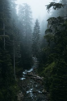 accio-forest: Washington at its finest. by Tanner Seablom – Panorama – Fotografie Dark Green Aesthetic, Nature Aesthetic, Beautiful World, Beautiful Places, Landscape Photography, Nature Photography, Photography Awards, Aerial Photography, Photography Business