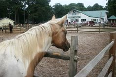 Misty of Chincoteague III and the Pony Centre