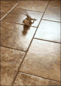 Bearded dragon peels out on tile floor. [video]