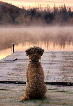 Say A Prayer, Puppy Pictures, Lake Life, Simple Pleasures, Country Life, Country Charm, Country Living, Cat Memes, Dog Life
