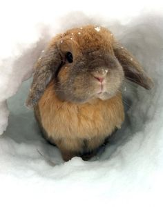 pretty bunny in the snow.
