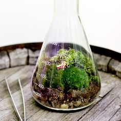 Twig Terrariums are fantastic. They tell their own stories. Saw them at the Philadelphia Flower Show and loved it !!!!