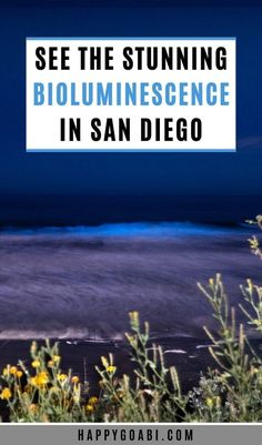 Did you know that San Diego sometimes has incredible bioluminescent waves where the ocean glows neon blue? It is epic! So if you want to experience this for yourself, check out all the information you need to know to see this rare phenomenon. | #beach #california #sandiego #travel | bioluminescence beach San Diego | bioluminescence water | bioluminescence ocean | bioluminescence San Diego | bioluminescence waves | bioluminescent beach San Diego | bioluminescent water | bioluminescent ocean
