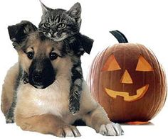 dog and cat halloween pictures | Rain Advisory in Effect for L.A. County Beaches