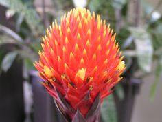 like-a-pineapple All Plants, Pineapple, Pinecone