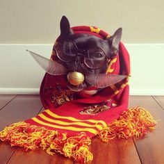 In a nod to Harry Potter here is Sonya Yu and her Most Adorable French Bulldog on Instagram.  His name is Trotter and you will be seeing a lot of him all over the internet.