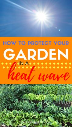 How do you deal with a hot summer heat wave in the vegetable garden? I'll show you how to save your plants with these easy tips for your backyard garden. #gardening #summer #beginnergardener #heatwave #gardentips #vegetablegarden