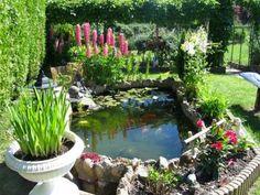 plantes aquatiques bassin de jardin