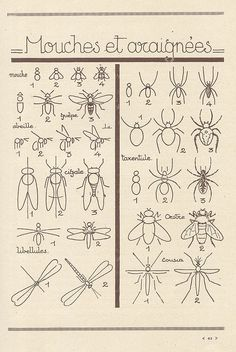 Learn To Draw Bugs. ムシ!! ムシ!!
