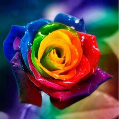 rosas de colores - Buscar con Google