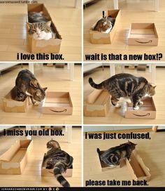It's a cat...in a box...