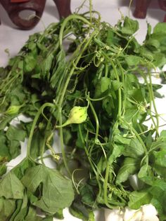 Natural remedies Fresh Plants Cundeamor by AmazingMagicalSpells Natural Medicine, Herbal Medicine, Portulaca Oleracea, Bitter Melon, Shops, Chinese Herbs, Water Plants, Herbs, Plants