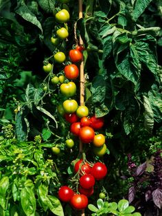 12 Easy-to-grow kid-friendly fruits and vegs