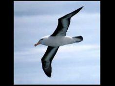 ▶ Albatross - Fleetwood Mac - studio version - YouTube