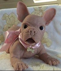 Buy reborn baby doll Paige Joanna Gomes