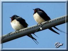 Tavaszi mesék - erzsilapja.lapunk.hu Bird, Animals, Birds, Animales, Animaux, Animal, Animais