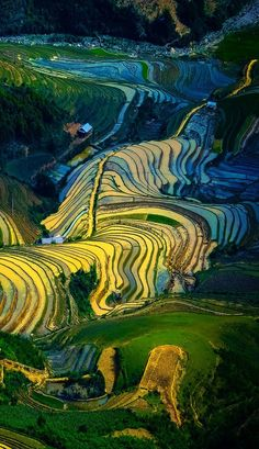 Rice fields on terraced of Mu Cang Chai, YenBai, Vietnam | 17 Unbelivably Photos Of Rice Fields. Stunning No. #15