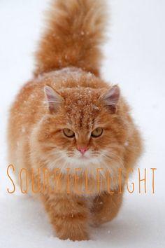 Squrrielflight