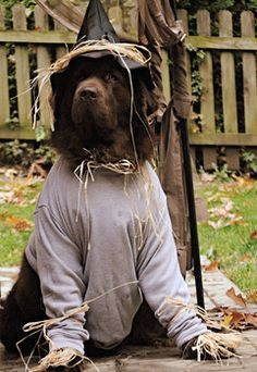 Safety tips: How to keep pets safe from Halloween hazards     http://www.examiner.com/article/safety-tips-how-to-keep-pets-safe-from-halloween-hazards Read more to keep your #pets safe this #Halloween!